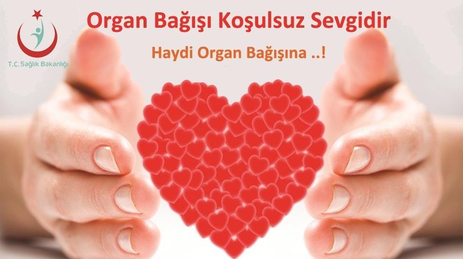 2020-Organ Bağışı